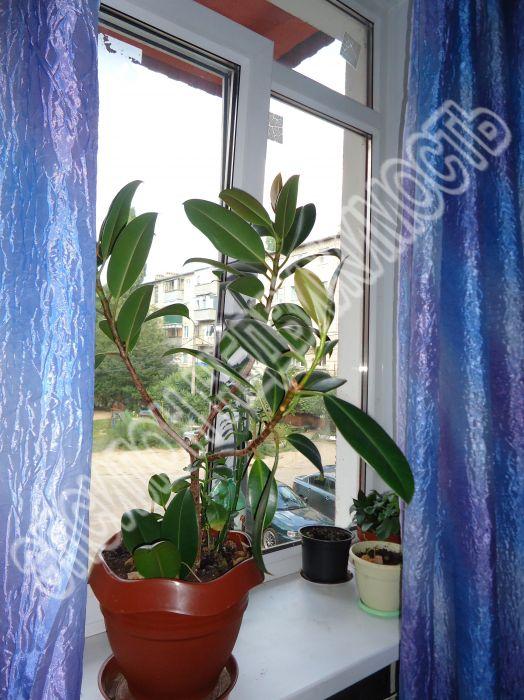 Продам 3-комнатную квартиру в городе Курск, на улице Сумская, 3, 2-этаж 4-этажного Кирпич дома, площадь: 78/43/8 м2